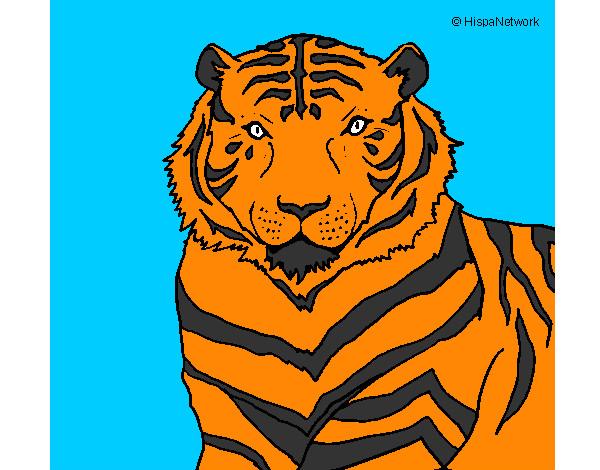Disegni Di Tigres Da Colorare Acolore Com