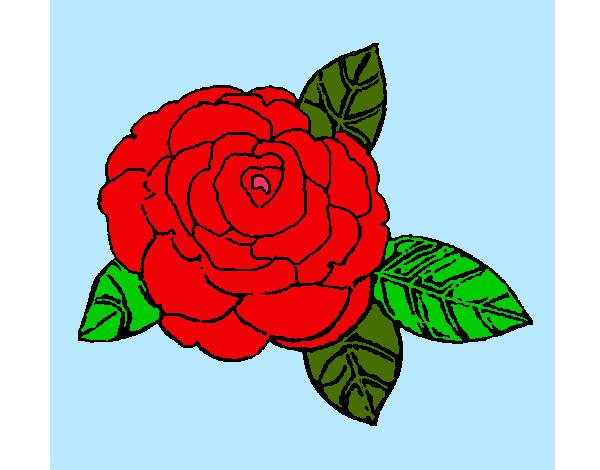 Disegno Di Rosa Con Foglie Da Colorare Acolore Com: Disegni Di Rose Da Colorare