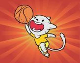 Gatto basket